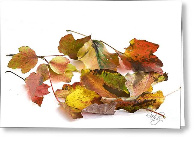 Autumn Feast Greeting Card by Rahat Iram