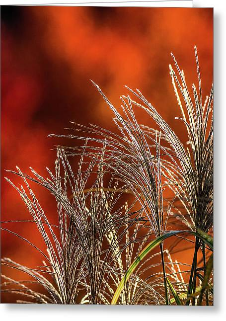 Autumn Fire - 1 Greeting Card