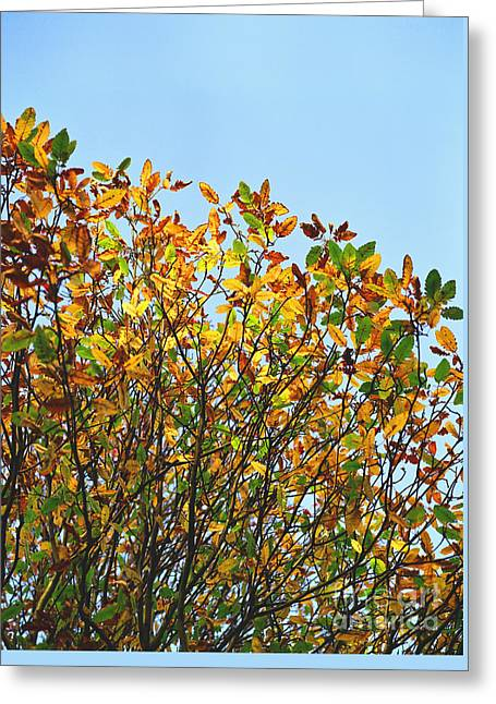 Autumn Flames - Original Greeting Card