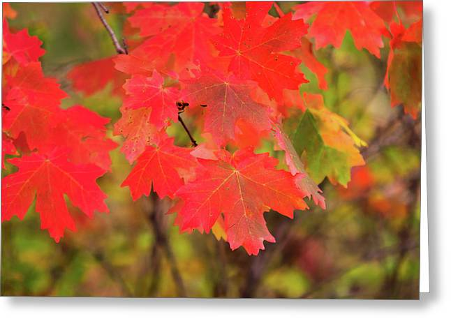 Greeting Card featuring the photograph Autumn Flash by Bryan Carter