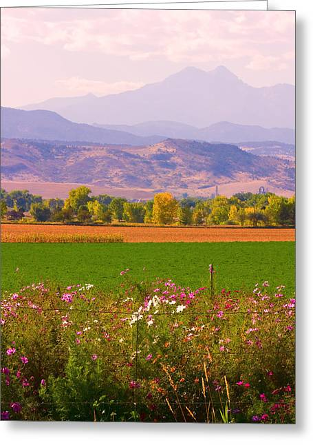 Autumn Flowers At Harvest Time Greeting Card by James BO  Insogna