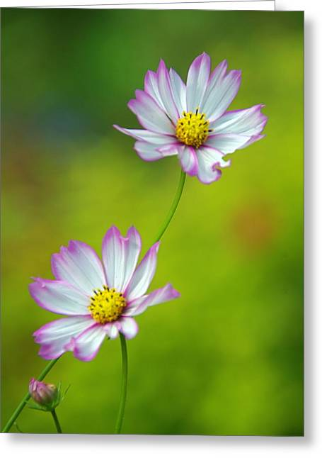 Greeting Card featuring the photograph Autumn Flowers by Byron Varvarigos