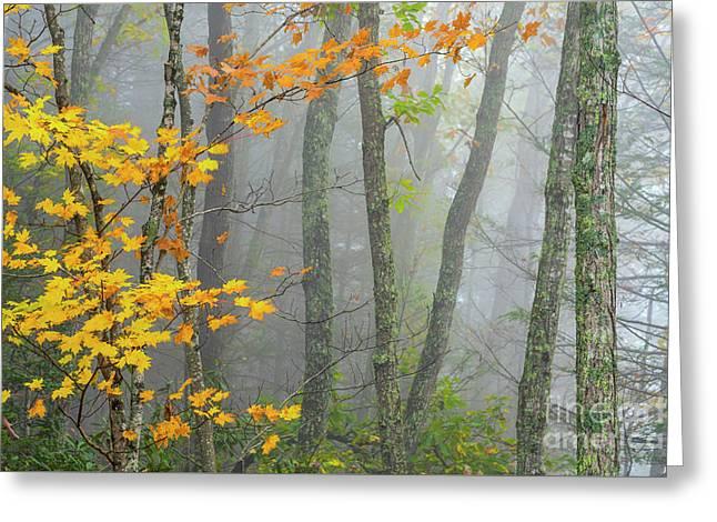 Autumn Fog Gauley River Nra Greeting Card by Thomas R Fletcher