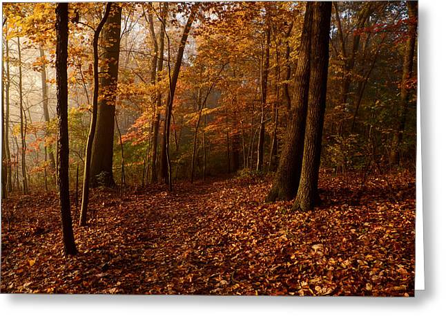 Autumn Forest Greeting Card by Ann Bridges