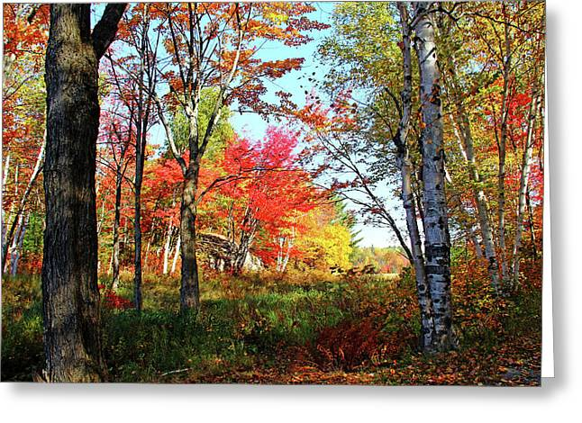 Greeting Card featuring the photograph Autumn Forest by Debbie Oppermann