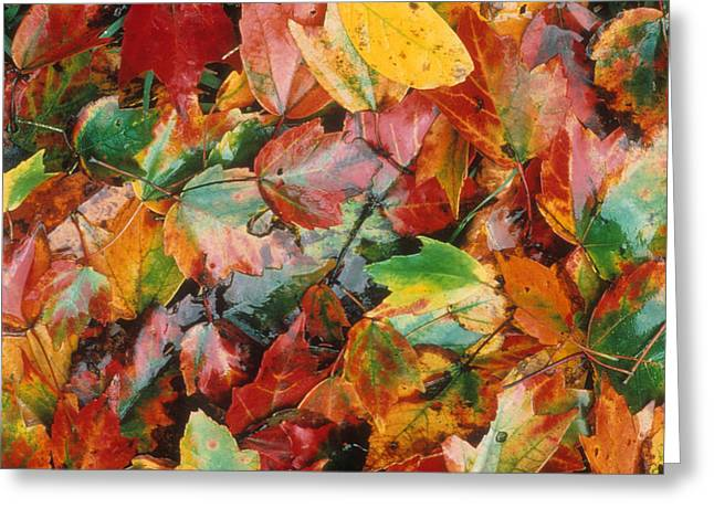 Autumn Forest Floor Greeting Card by Gerard Fritz