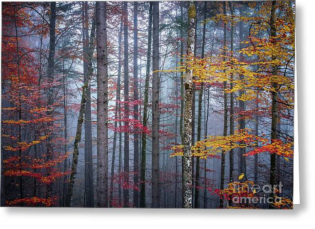 Greeting Card featuring the photograph Autumn Forest In Fog by Elena Elisseeva