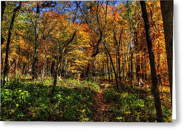 Autumn Forest Path At Johnson's Mound Greeting Card
