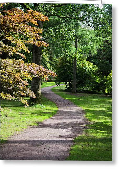 Greeting Card featuring the photograph Autumn Forest Path by Scott Lyons