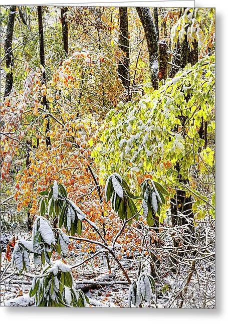 Autumn Forest With Snow  Greeting Card