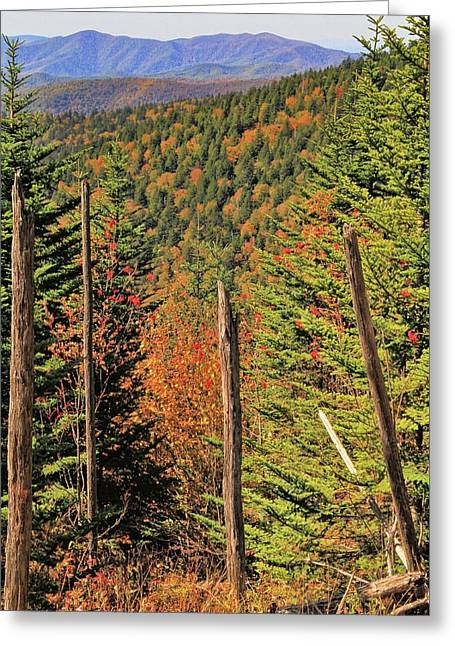 Autumn From The Top Of Clingman's Dome Greeting Card by Dan Sproul