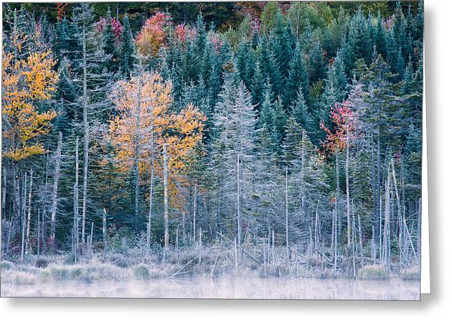 Autumn Frost Greeting Card by Jeff Sinon