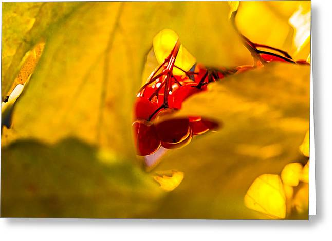 Greeting Card featuring the photograph Autumn Fruits - Viburnum Berries by Alexander Senin
