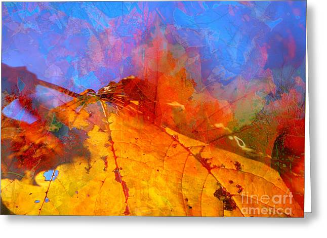 Autumn Fusion 1 Greeting Card by Jeff Breiman
