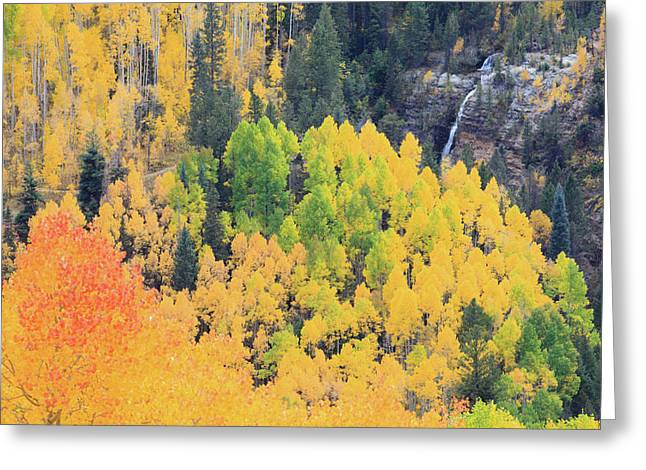 Greeting Card featuring the photograph Autumn Glory by David Chandler