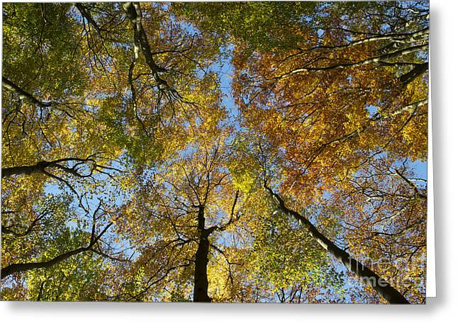 Autumn Glory Greeting Card by Tim Gainey