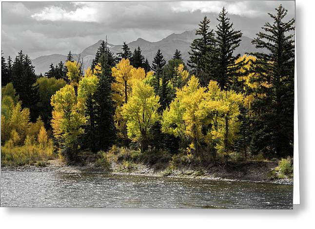 Greeting Card featuring the photograph Autumn Glow by Colleen Coccia