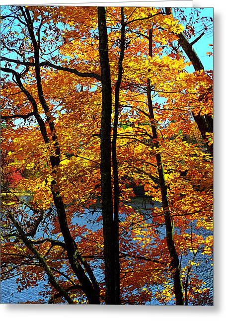 Autumn Gold Greeting Card by Alan Lenk