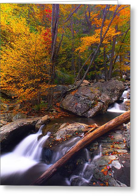 Autumn Gold Greeting Card by Everett Houser