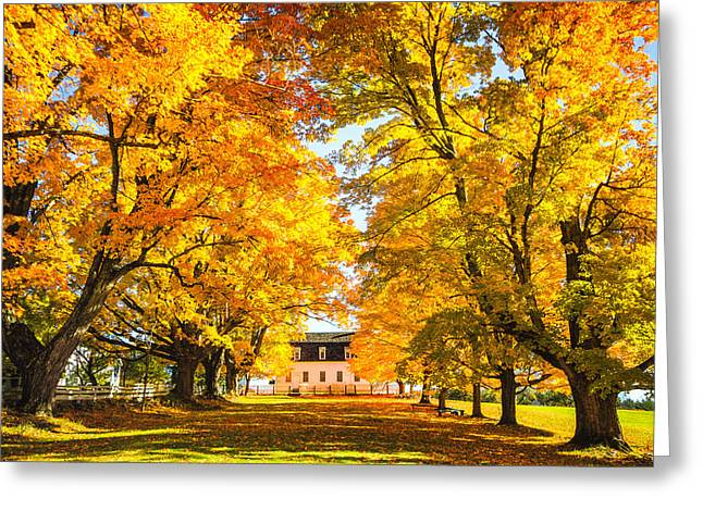 Autumn Gold IIi Greeting Card