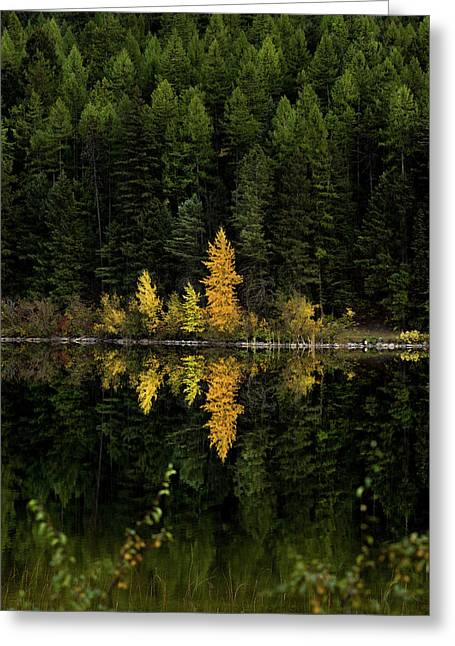 Autumn Gold // Whitefish, Montana  Greeting Card