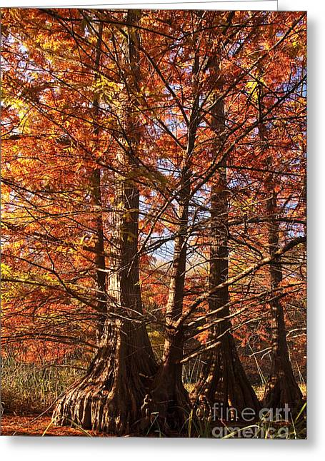Greeting Card featuring the photograph Autumn Grandeur At Lake Murray by Tamyra Ayles