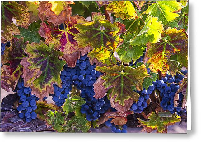 autumn Grapes Greeting Card by Garry Gay