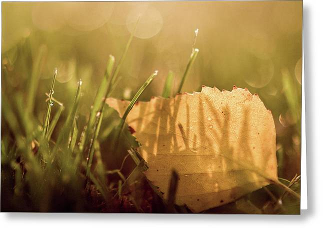 Autumn Grass With Dew And Fallen Leaf II Greeting Card