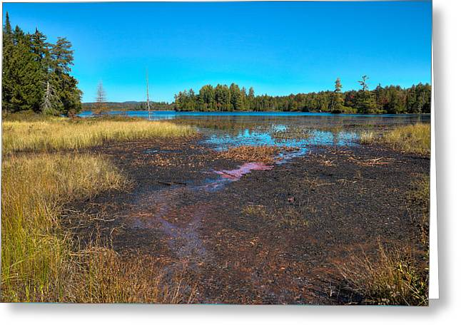 Autumn Grasses On Raquette Lake Greeting Card by David Patterson