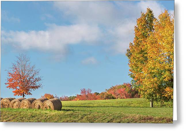 Autumn Hay Square Greeting Card by Bill Wakeley