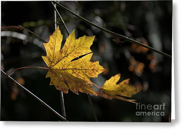 Autumn Highlight Greeting Card by MaryJane Armstrong
