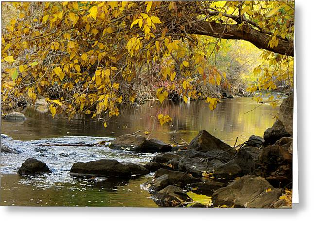 Autumn Hues Greeting Card by Jan  Tribe