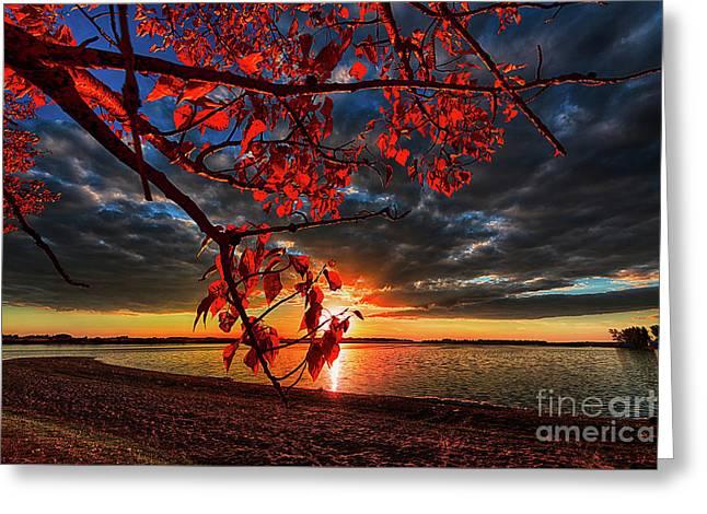 Autumn Illumination Greeting Card