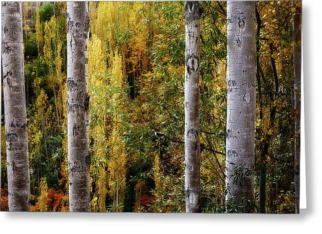 Autumn In A Jungle Greeting Card