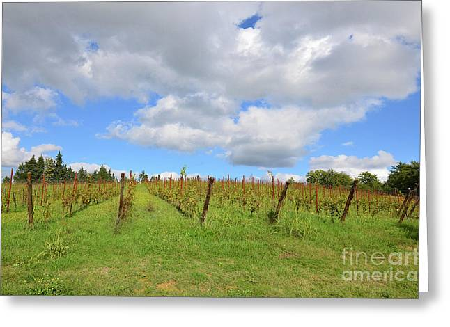 Autumn In A Vineyard In Tuscany Italy Greeting Card by DejaVu Designs