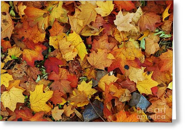 Autumn In Canada Greeting Card by Reb Frost