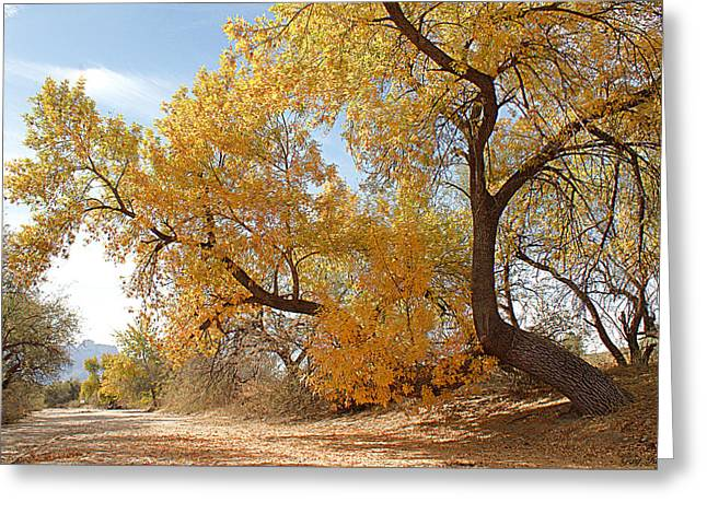 Autumn In Cdo Wash Greeting Card by Greg Taylor