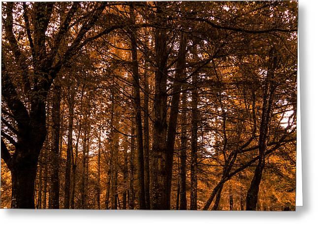 Autumn In Colligan Wood Greeting Card