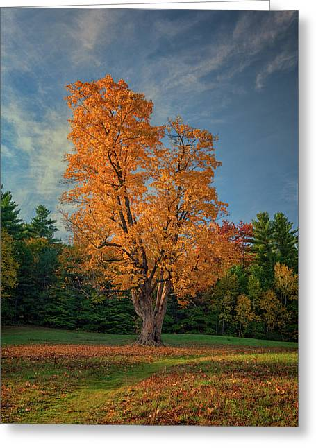 Autumn In Maine Greeting Card by Rick Berk