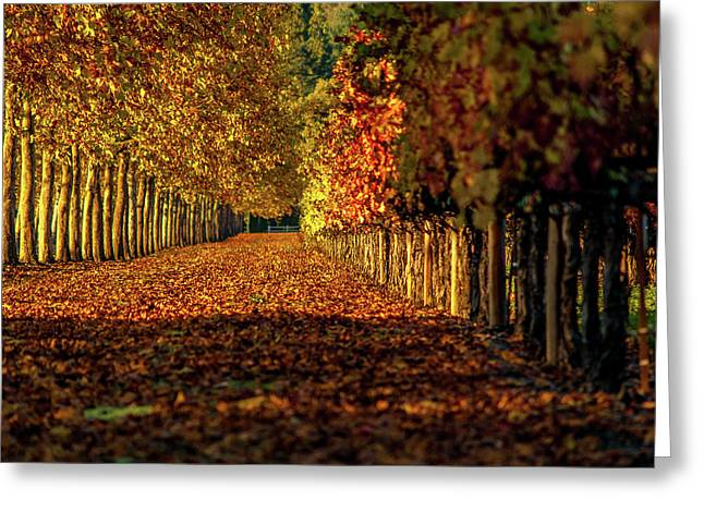 Autumn In Napa Valley Greeting Card by Bill Gallagher