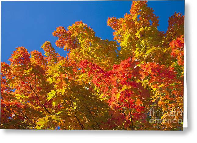 Autumn In New Hampshire Greeting Card by Larry Landolfi
