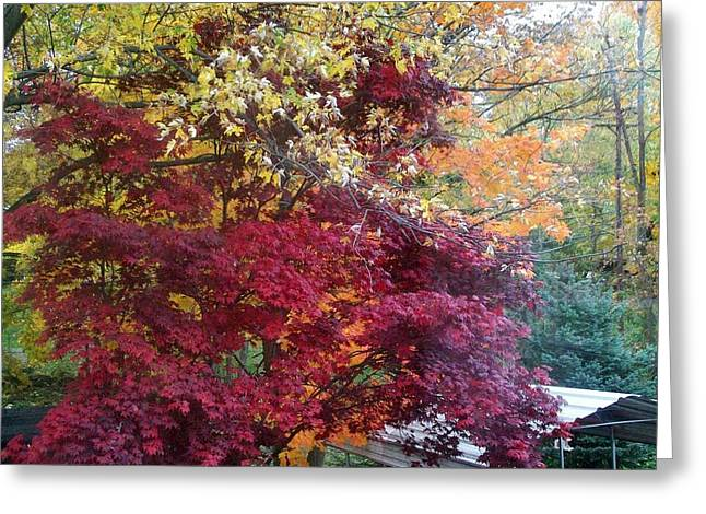 Autumn In October Greeting Card by Misty VanPool
