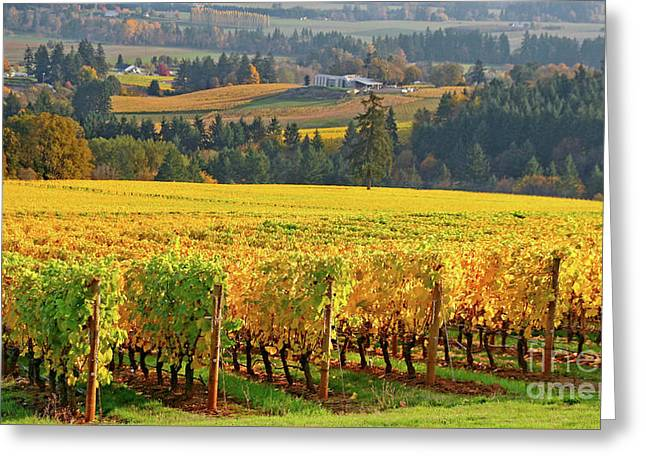 Autumn In Oregon Wine Country Greeting Card