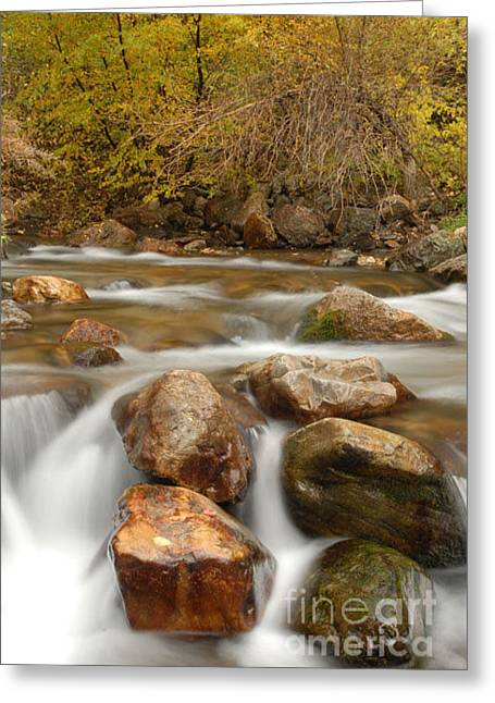 Autumn In Provo Canyon Greeting Card by Dennis Hammer