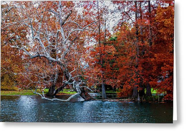 Autumn In Spring Grove Greeting Card