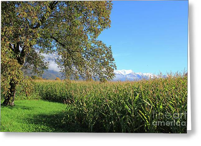 Autumn In Swiss Mountain Landscape Greeting Card
