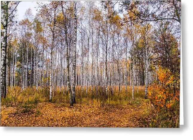 Greeting Card featuring the photograph Autumn In The Birch Grove by Dmytro Korol