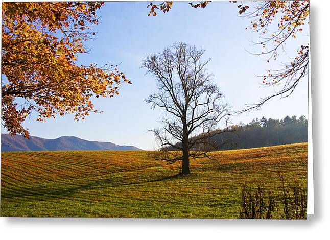 Greeting Card featuring the photograph Autumn In The Cove by Bob Decker