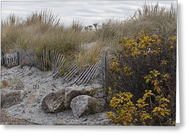 Greeting Card featuring the photograph Autumn In The Dunes by Andrew Pacheco