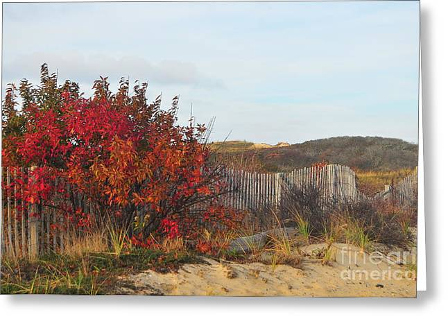 Seacape Greeting Cards - Autumn in the Dunes Greeting Card by Catherine Reusch  Daley